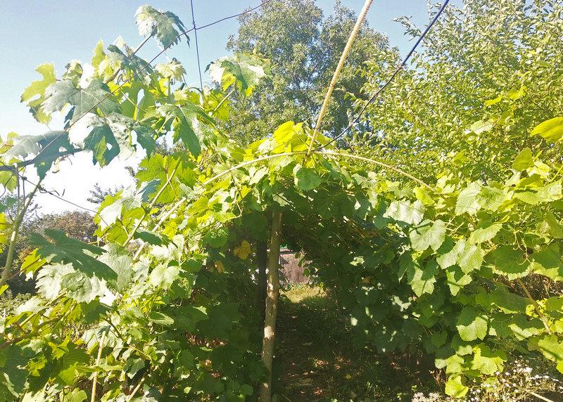 Стойки для винограда из стеклопластиковой арматуры
